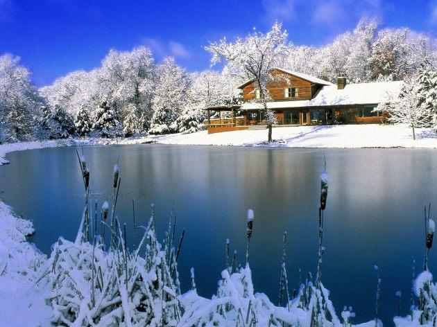Christmas Nature